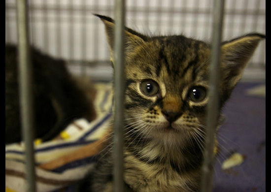 Picture of a kitten in a cage